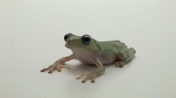 Triodos-Frog-January-2015